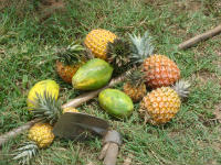 Fruits of the harvest