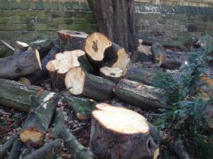 Trees rotten 2