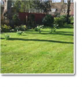 Halls gardens