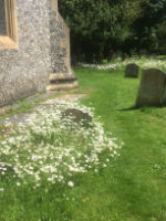 churchyard May 2017