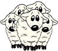 Messy Sheep Trail