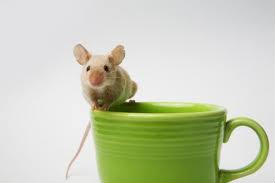 coffee mouse
