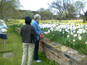 Admiring the daffodils