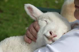 Shepherd holding lamb