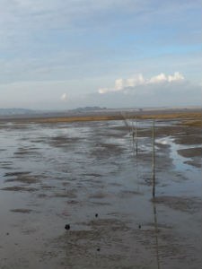 Lindisfarne pilgrim way