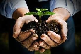 seedling in cupped hands