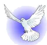 Outreach Dove