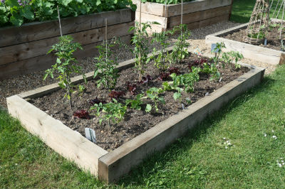 Photo of salad bed