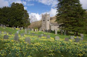 churchyard with daffs