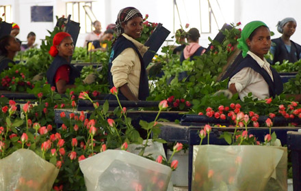 buy fairtrade flowers