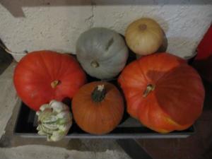 Gourds 2013