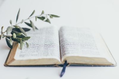 bible and olive branch