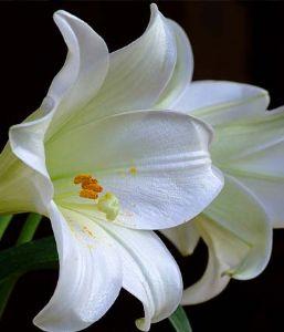 bereavement flower
