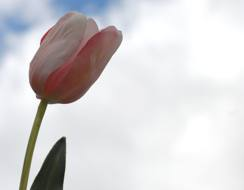 funerals flower