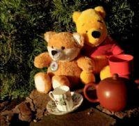 Teddy Picnic