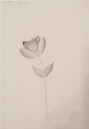 Charlotte drawing