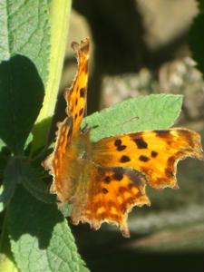 Butterfly, St Teilos Church