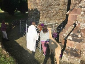 Blessing the Alpacas