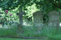 Churchyard with pink roses and headstones