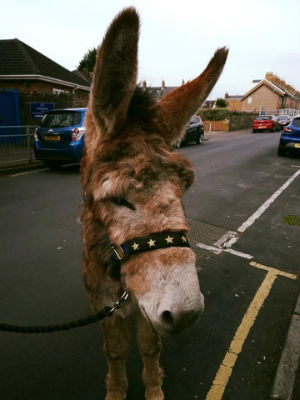 Donkey outside the Church