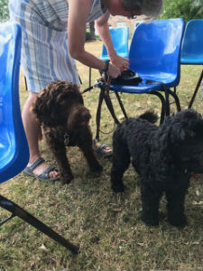 Pet Service July 2018 4