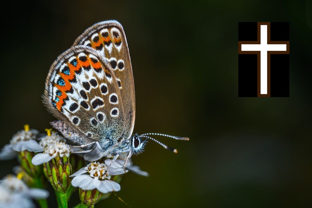 butterfly and cross