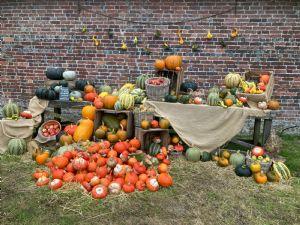 Squash harvest at Stourhead