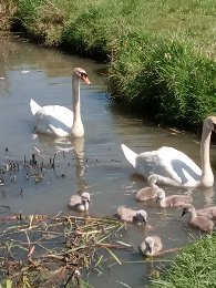 Swans River Biss