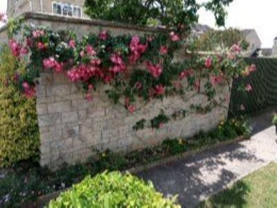 Good Year for Roses in BOA