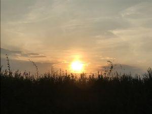 September evening sun over Hilperton