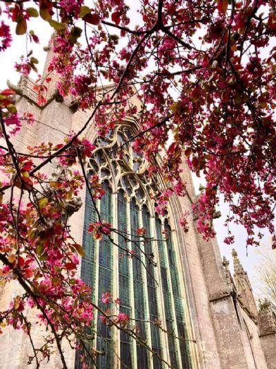 Church in blossom