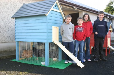 Fresh eggs need hens and a house