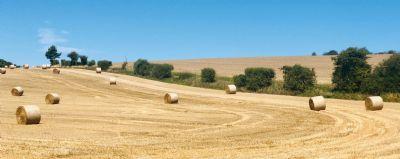 Harvest Shredded Wheat