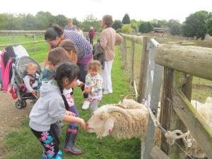 feeding the long horned sheep