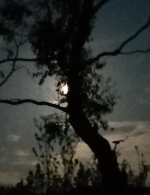 Pink Moon at 5.19am 8 April 2020