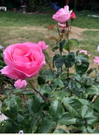 Photograph by Judy of her garden 22/6/20 14