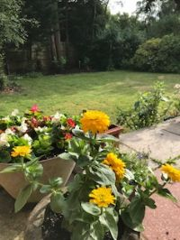 Photograph by Judy of her garden 22/6/20 4