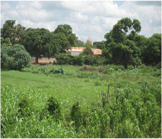 Crops growing in Wau - wet season