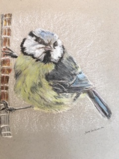 Pastel Drawing by Jane SeQ based on a photograph of a bird at Hilary's  7/6/20