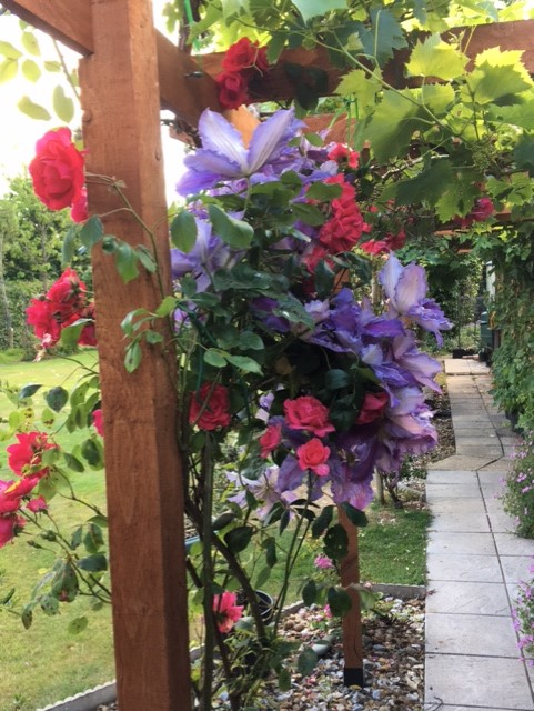 Photograph taken by Robin in his garden during the 'lockdown' time 5/6/20