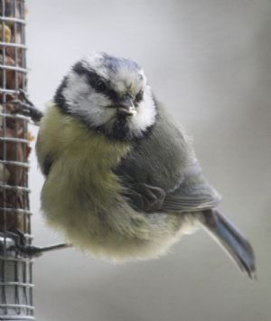 Hilary's photo of the bird that inspired the Pastel drawing by Jane SeQ  7/6/20