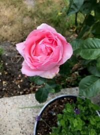 Photograph by Judy of her garden 22/6/20 13