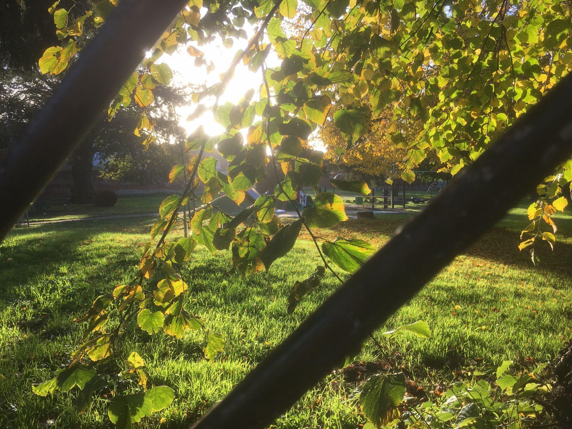 Trees in Wincheap