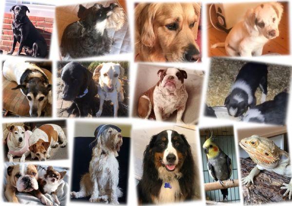 Parish Pets 2