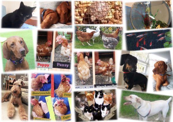 Parish Pets 1