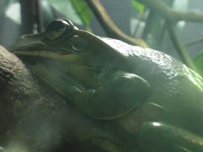 TREE FROG :competition time top 5