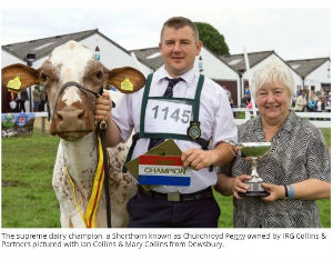 Shorthorn champion