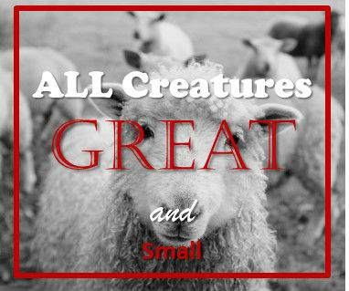 All Creatures Great  Small