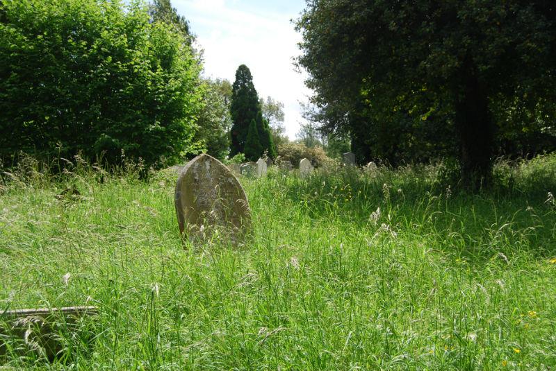 long grass in churhcyard