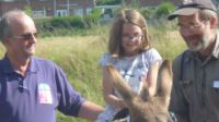 Family Fun Day Donkey2